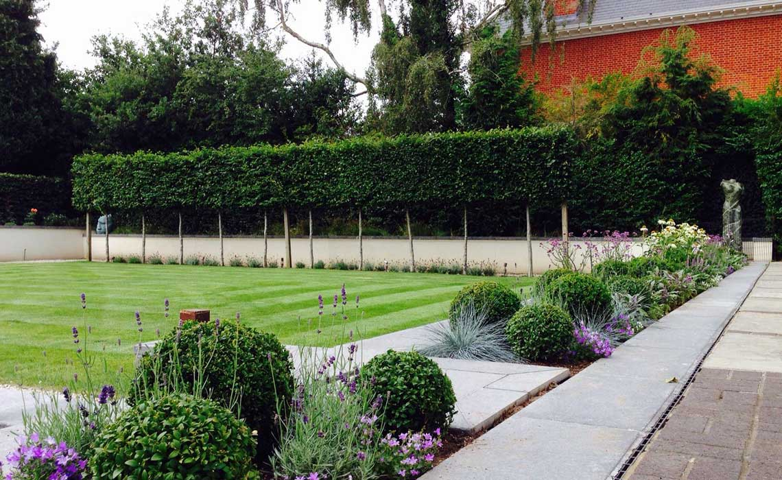 Lawn Scarifying Tips