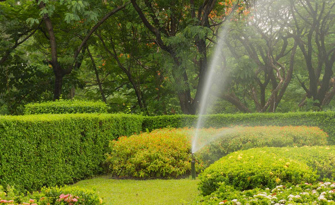 Guidelines on When to Water Trees, Shrubs and Hedges